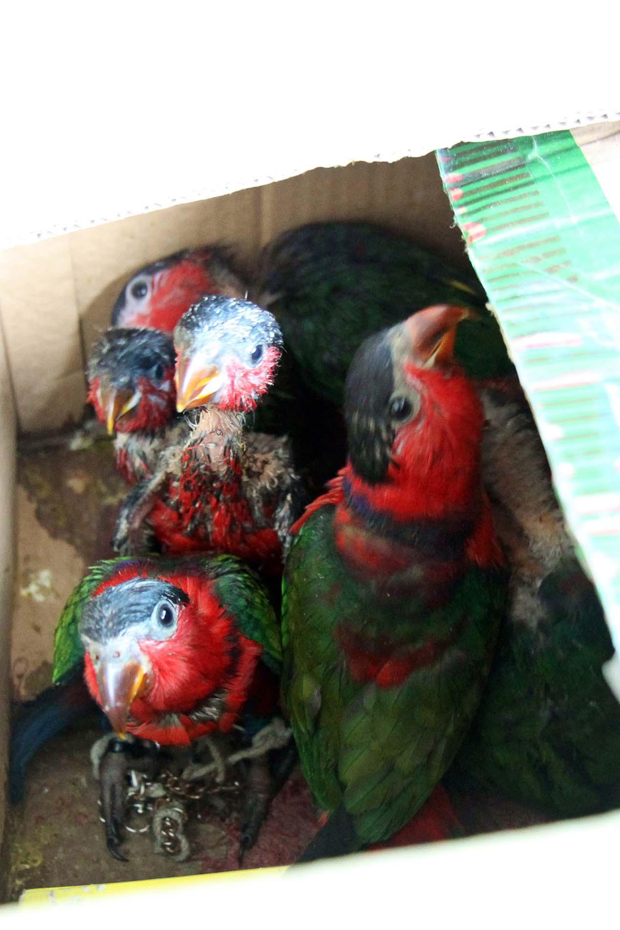 geschmuggelte Vögel
