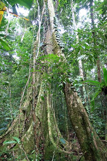 Im Jungle