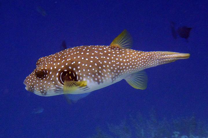unterwasser (2)