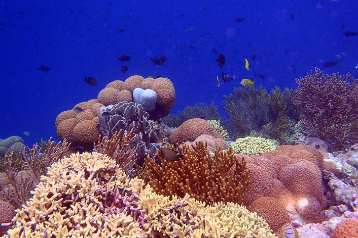unterwasserwelt der bandas