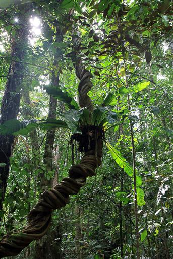 Unterwegs im Dschungel