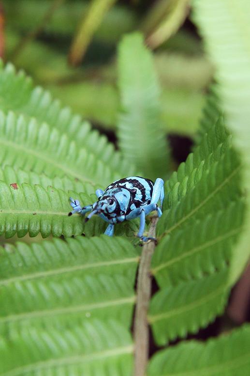 bunter käfer