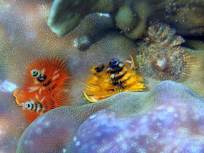 unterwasser (3)