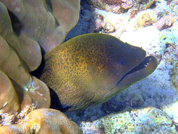 unterwasser (4)