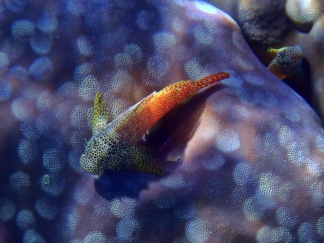 unterwasser (5)