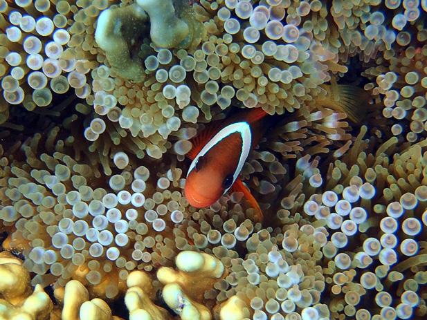 unterwasser (8)