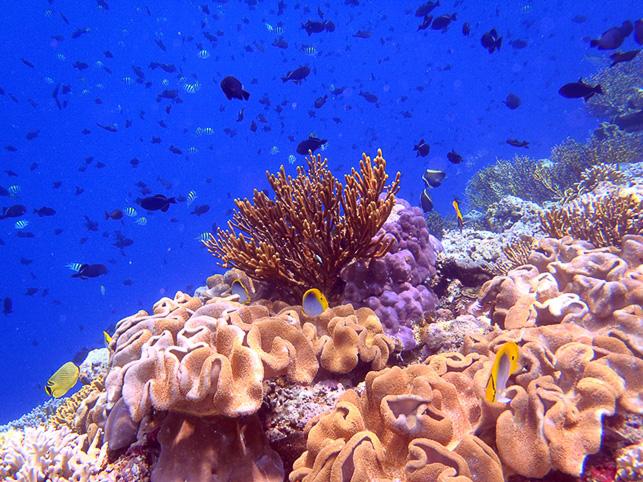 unterwasser (9)