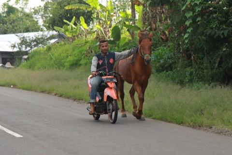 Mit dem Moped das Pferd ausführen
