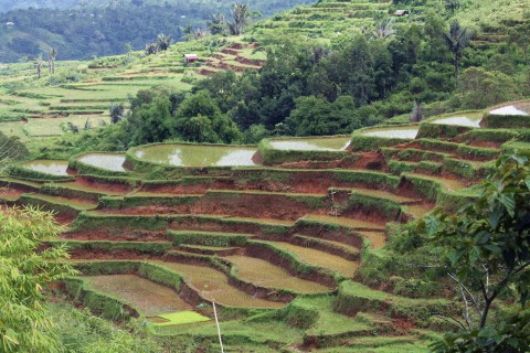 Reisterrassen in der Nähe von Ruteng