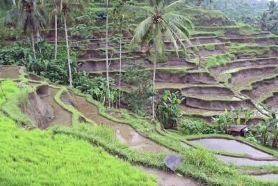 Unterwegs auf Balis Reisfeldern