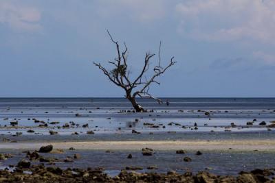 An einem Beach in der Nähe von Larantuka