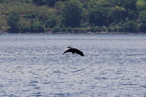 Delphine begleiten oft meine Bootsfahrten