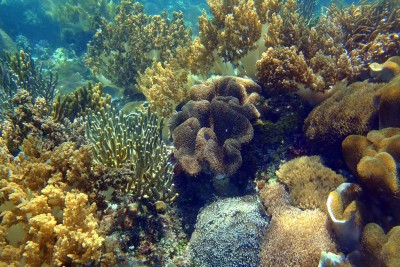 Korallengärten überall
