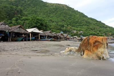 Strand von Lamalera mit Walkopf