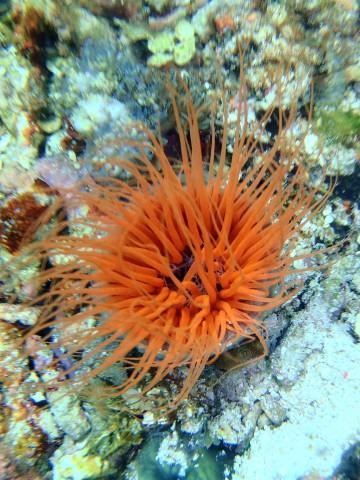Unterwasser-flower