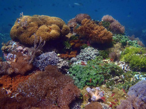 Unterwasserwelt von Alor