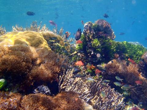 Unterwasserwelt vor Alor