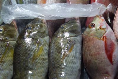 Welchen Fisch nehme ich denn heute