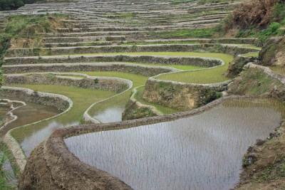 Überall fantastische Reisterrassen