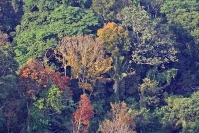 Herbst auf den Philippinen