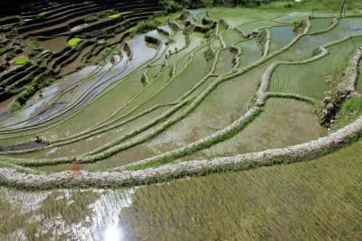 Reisterrassen in Maligcong