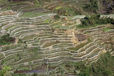 Reisterrassen von Maligcong
