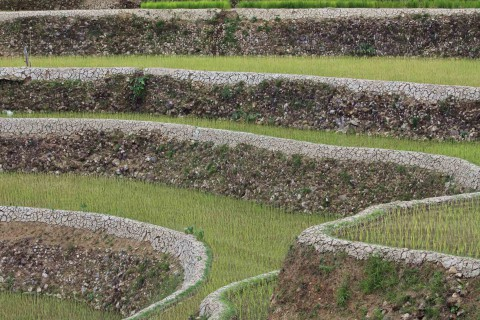 Terrassen in Maligcong