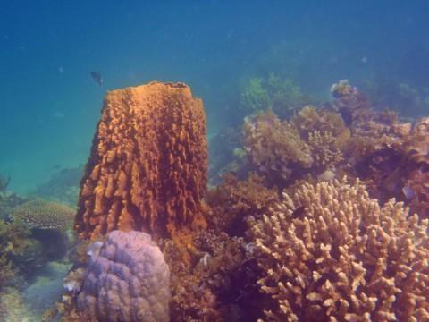 Korallen vor Port Barton